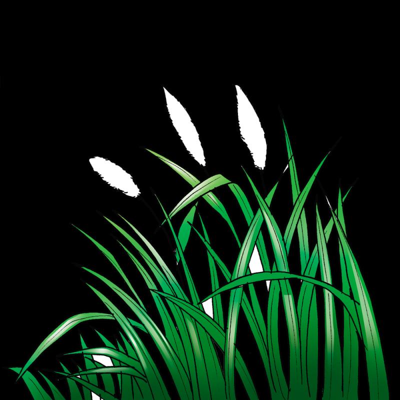 32 Gambar Sketsa Rumput Ilalang Terbaru Duniasket