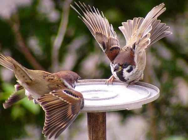 burung greja