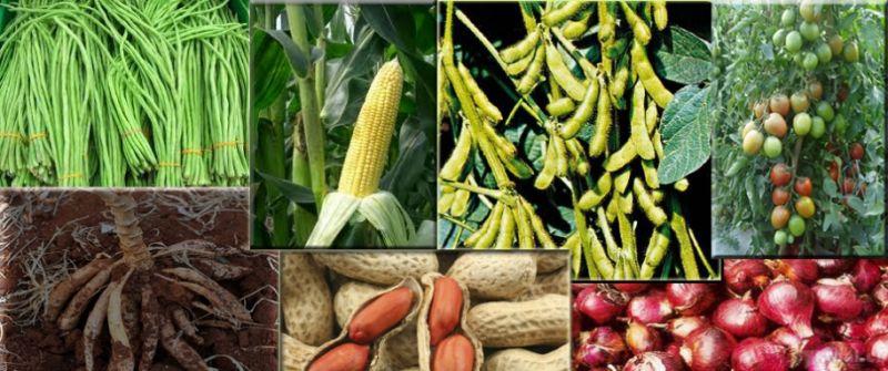 tanaman mahal cepat panen