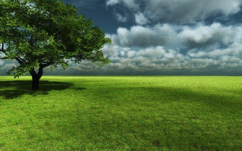 gambar rumput