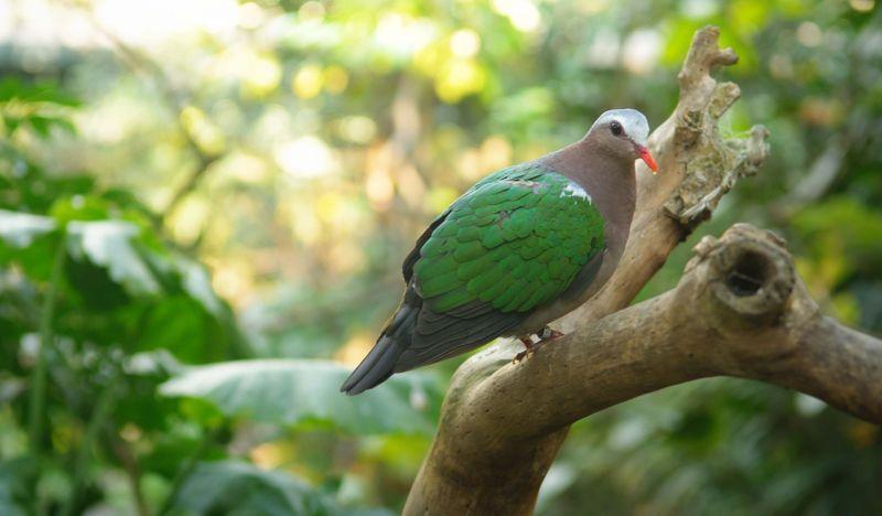 Download 43+  Gambar Burung Merpati Berpasangan HD Paling Keren