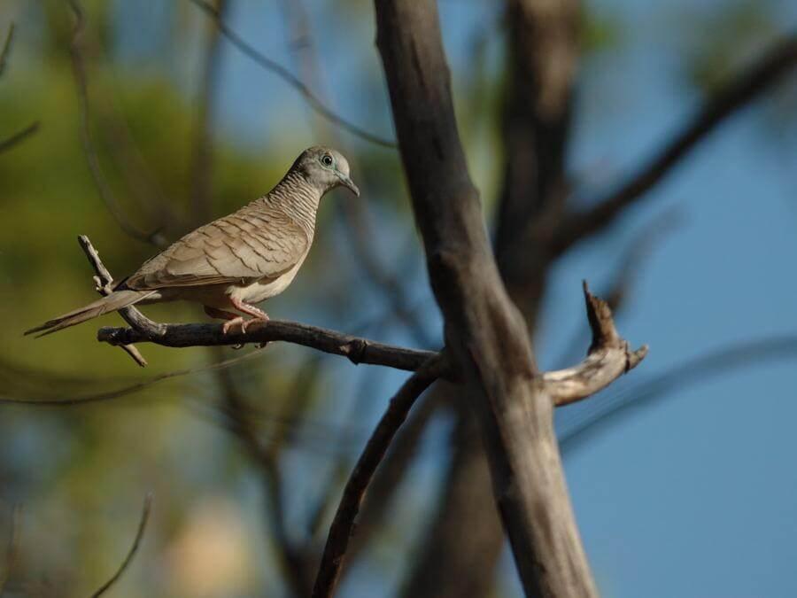 Gambar burung dara merpati