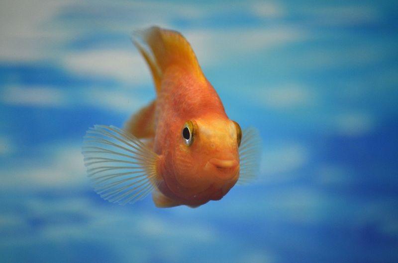 gambar ikan kartun