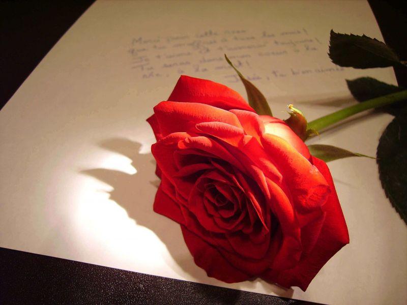 Kata Kata Mutiara Cinta Bijak Romantis Islami Sedih Lucu Untuk